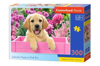 B-030071 Castorland LABRADOR PUPPY IN PINK BOX