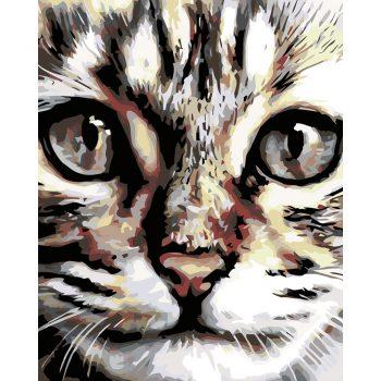 """Piešimas pagal skaičius """"Katės veidelis"""" (40x50 cm)"""